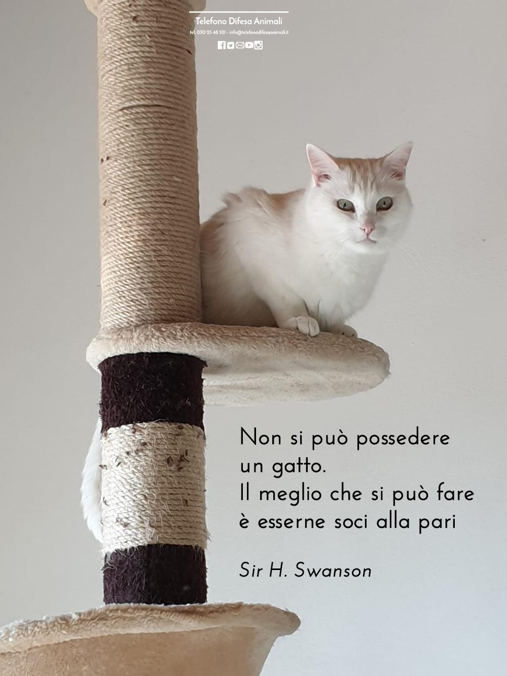 Non si può possedere un gatto. Il meglio che si può fare è esserne soci alla pari(Sir H. Swanson)