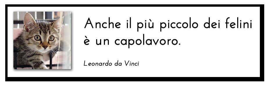 Anche il più piccolo dei felini è un capolavoro (Leonardo da Vinci)