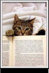 biblioteca_giudi