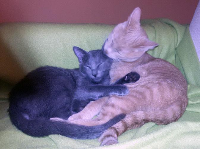 Gatti fortunati telefono difesa animali for Gatto che starnutisce