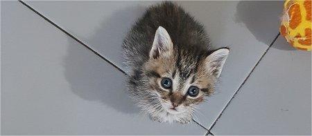 Un gattino, e tutti gli altri …