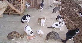 Perchè Sterilizzare Un Gatto Telefono Difesa Animali