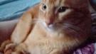 Gatto maschio 2 anni