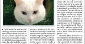 """Telefono difesa animali"" cerca aiuto!"