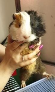 adozione-porcellini-india-3