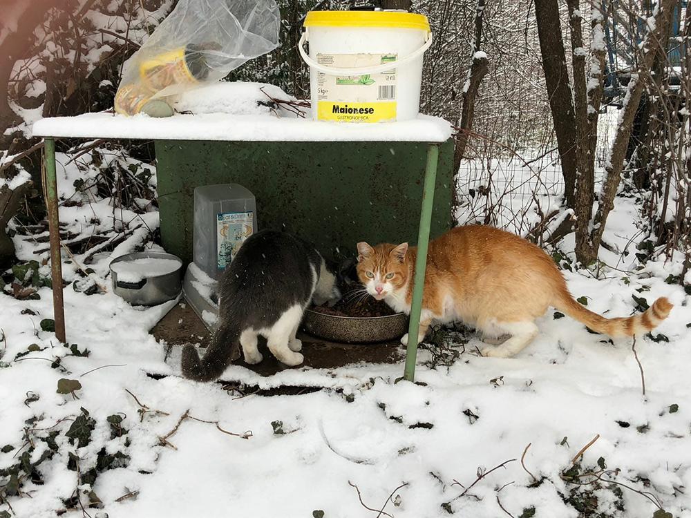 colonia-gatti-inverno