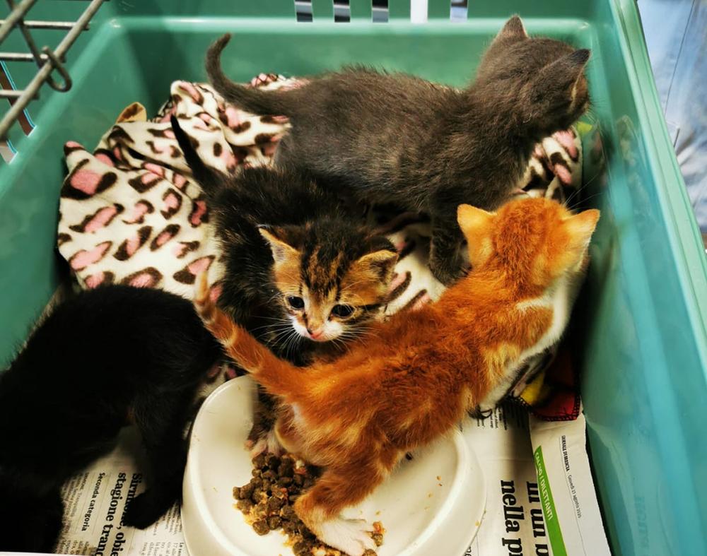 gattini-abbandonati-gattile