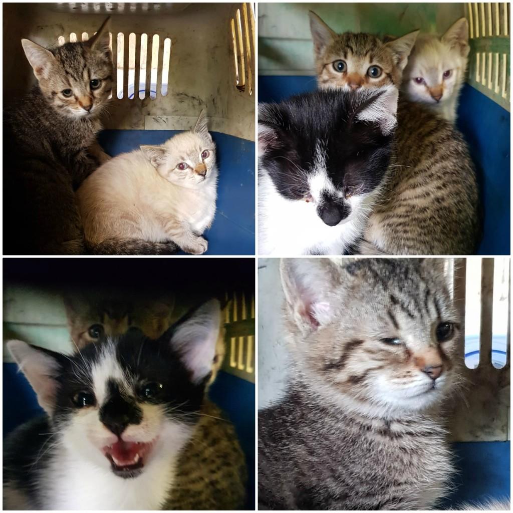 gattini abbandonati a leno (bs)