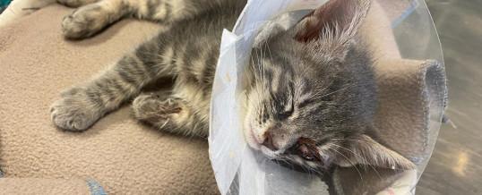 Ancora gattini abbandonati…