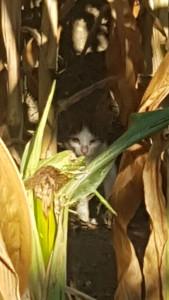 gattino-campo-2