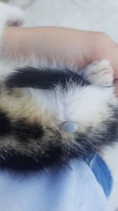 gattino-campo-4