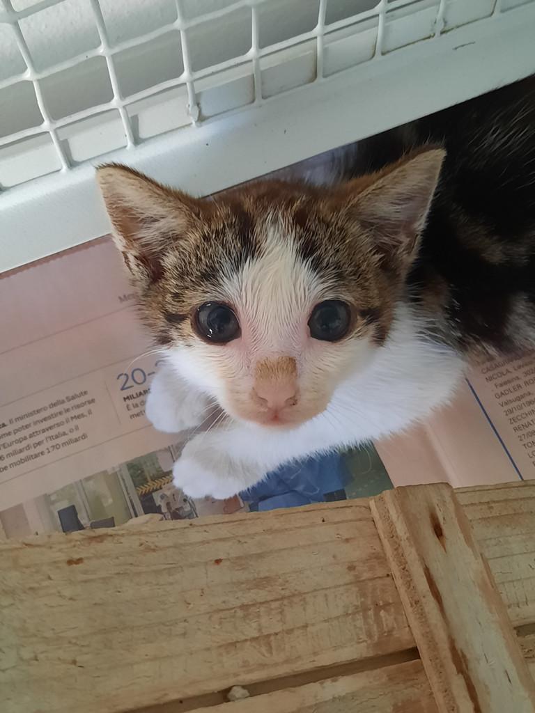 gattino-campo-5