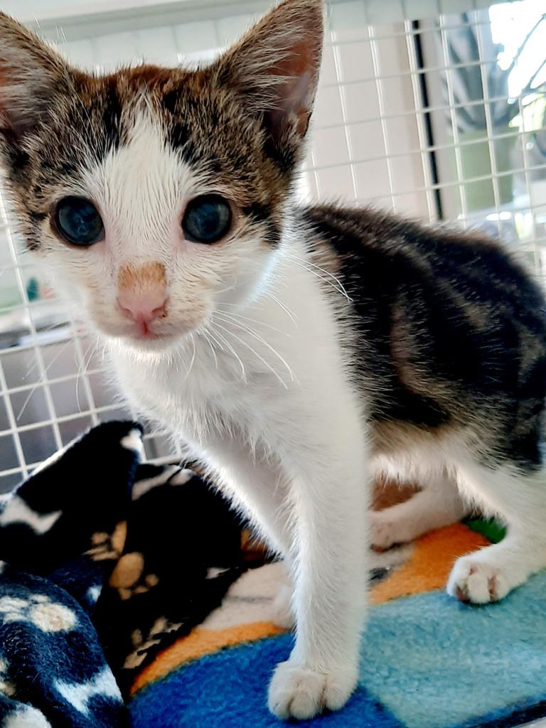 gattino-campo-6