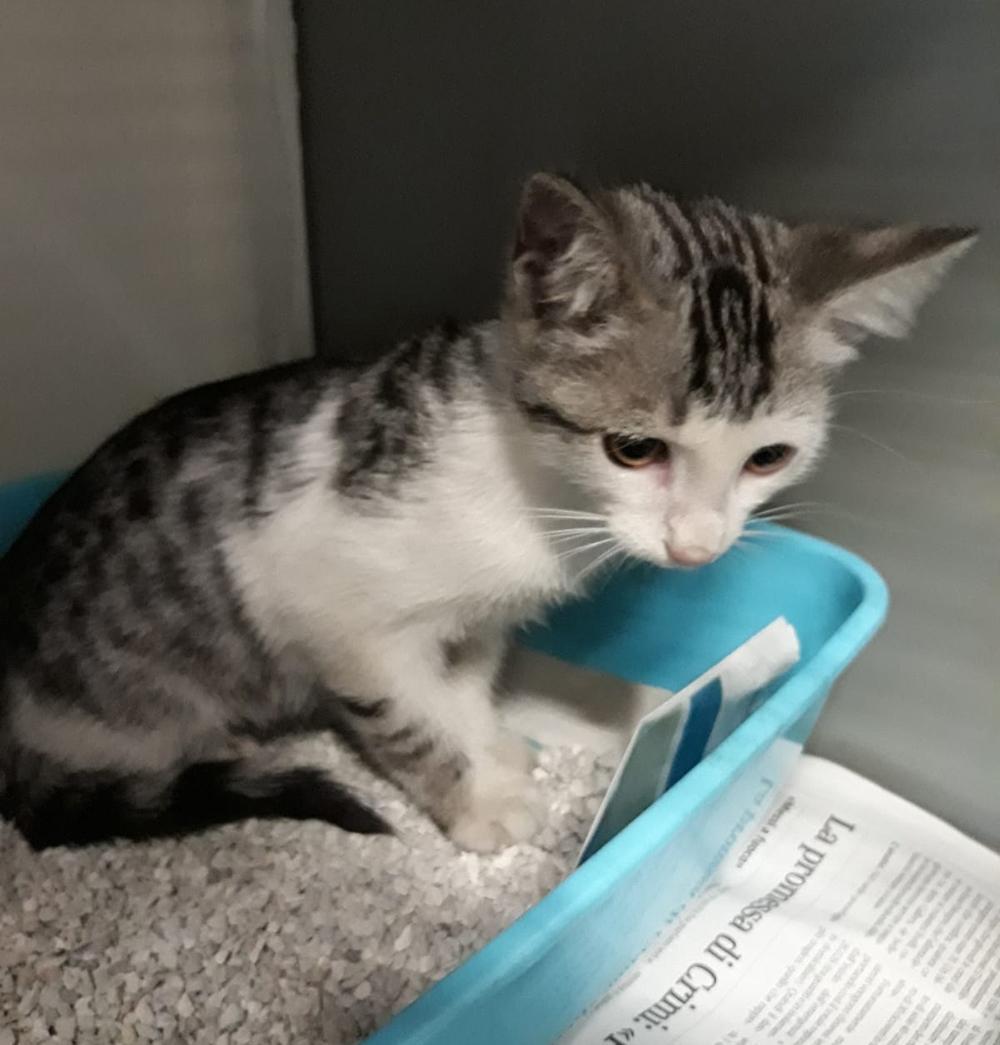 gattino-trovato-2
