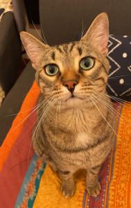 gatto-da-adottare-2