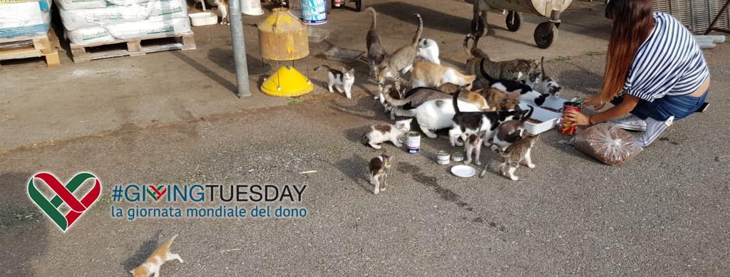 giving-tuesday-now-gattile