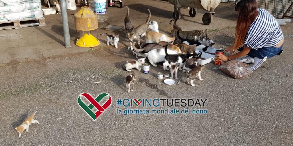 giving-tuesday-now-gattile-aiuto
