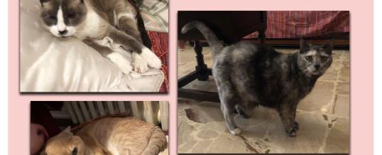 Joti, Roxy e Grey