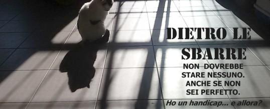 PUBBLICITA' PROGRESSO: adottare un gatto con handicap