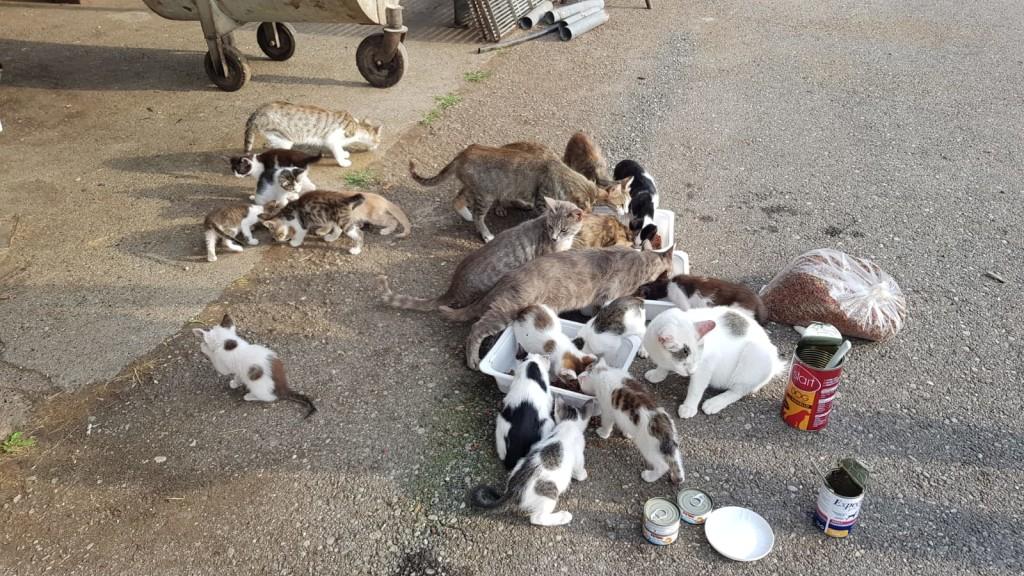 La situazione delle colonie feline