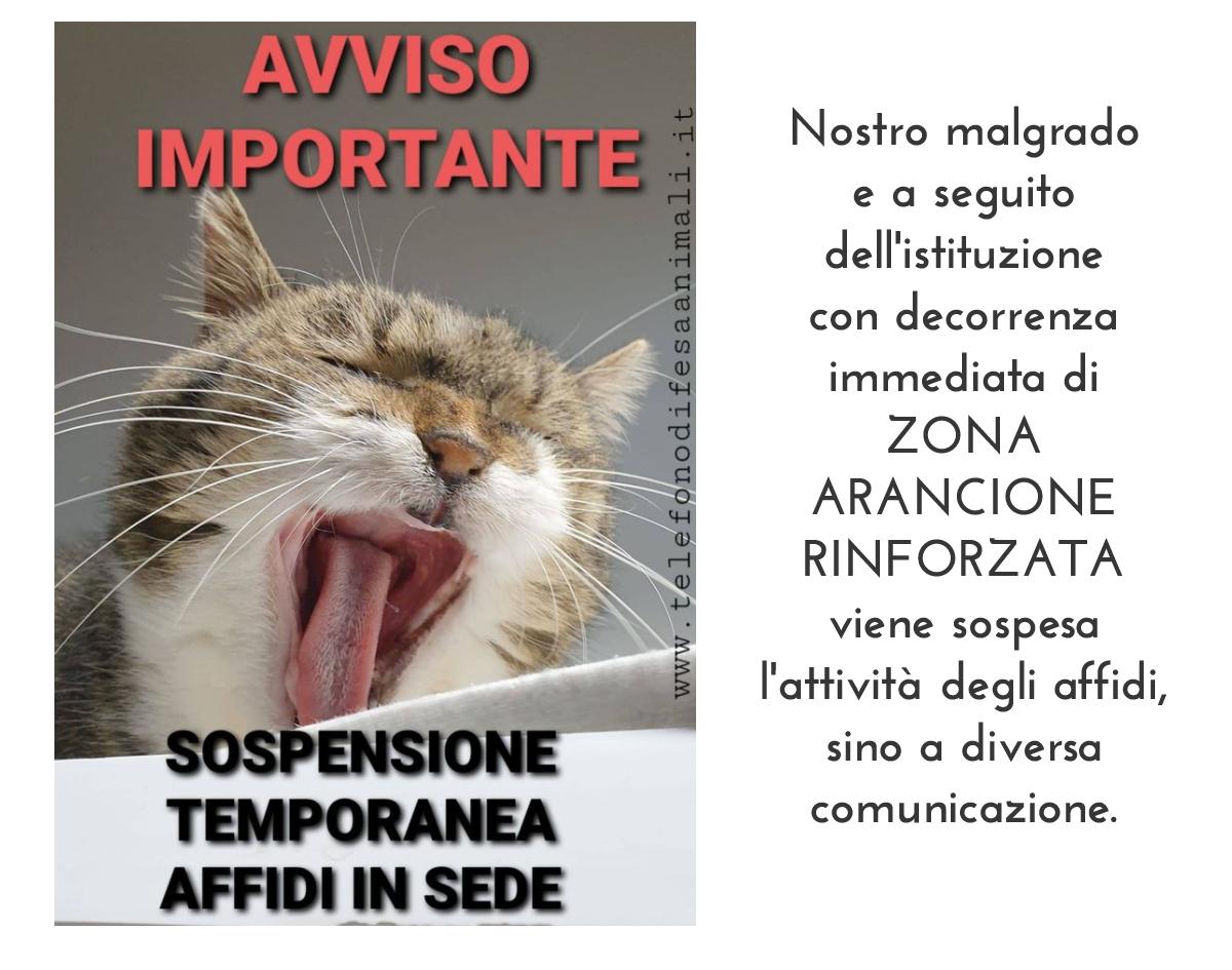 sospensione-affidi