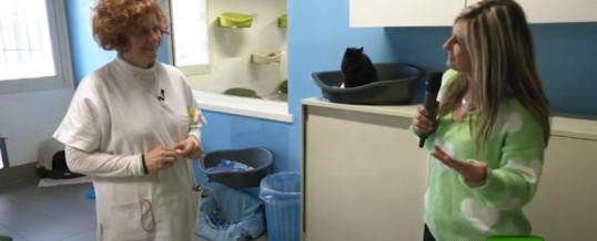 Cani, gatti e compagnia: i mici di Telefono Difesa Animali (Telecolor)