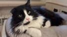 Teo, gatto adulto senza casa