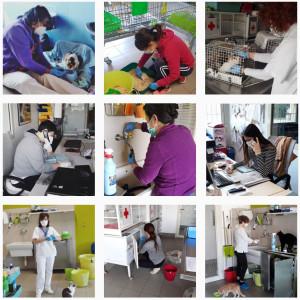 volontari-gattile-contro-il-covid-1