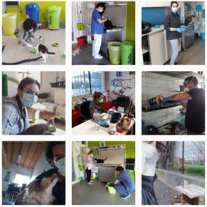 volontari-gattile-contro-il-covid-2
